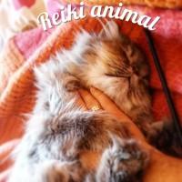 Reiki sur les animaux