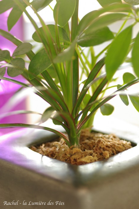 RDV détente #9 : Créer un environnement apaisant